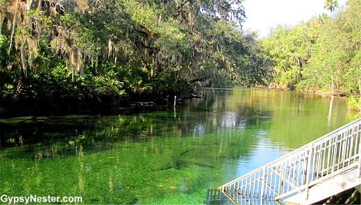 Blue Springs State Park in Florida - fun of manatees!