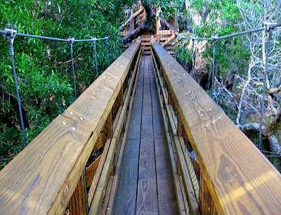 Canopy Walkway in Florida