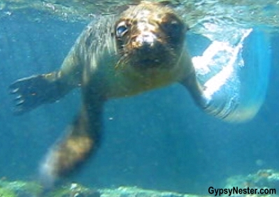 Snorkeling with a sea lion in The Galapagos Islands!