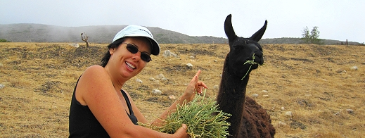 Veronica feeds a llama at El Capitan Canyon Glamping