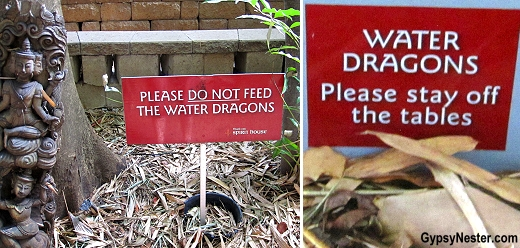 Water dragon signs at Spirit House Cooking School in the Hinterlands of Queensland Australia