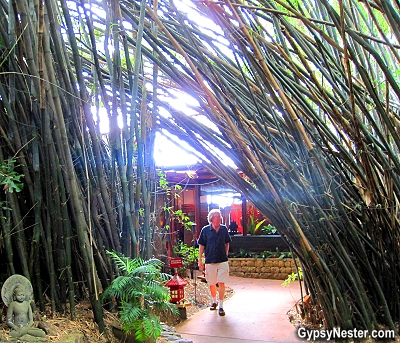 A walk in the gardens of Spirit House in the Hinterlands of Queensland Australia