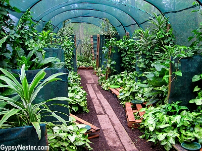Greenhouse type buildings for raising snails at Glasshouse Gourmet Snails in the Hinterlands of Queensland, Australia