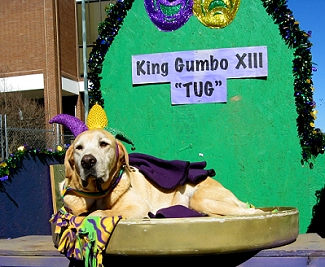 Canine King of Mardi Gras Dog Parade