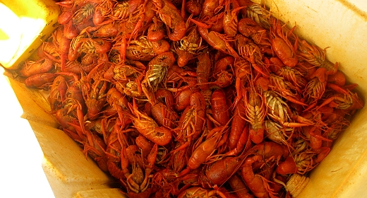 Mmmmmm crawfish!