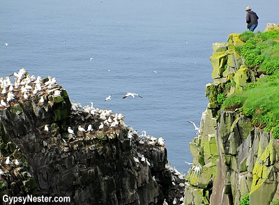 Bird Rock at Cape St. Marys in Newfoundland