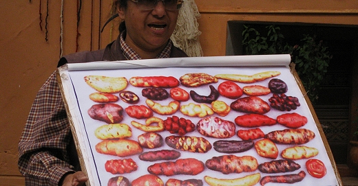 Some of the many varieties of potato in Peru