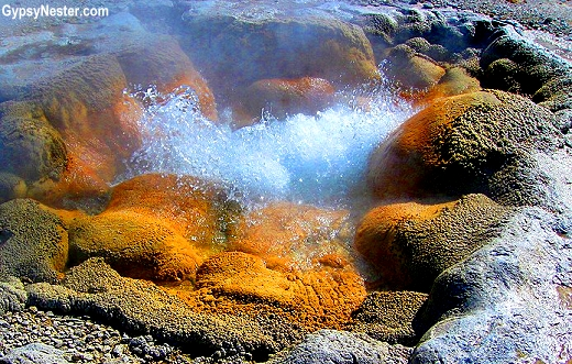 Two-thirds of all the geysers in the world are within the borders of Yellowstone National Park